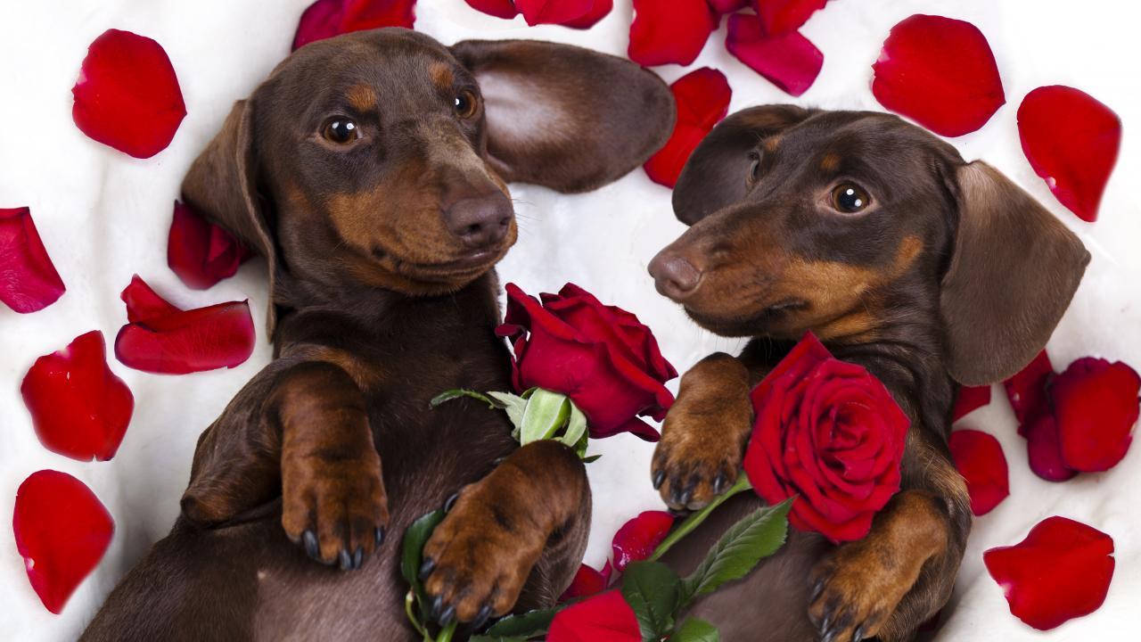 6eecdb74a922 Ο Φεβρουάριος είναι ο μήνας της αγάπης. Όσο εσείς ψάχνετε λοιπόν το  καλύτερο δώρο για τους αγαπημένους σας αλλά και για τα σκυλάκια σας