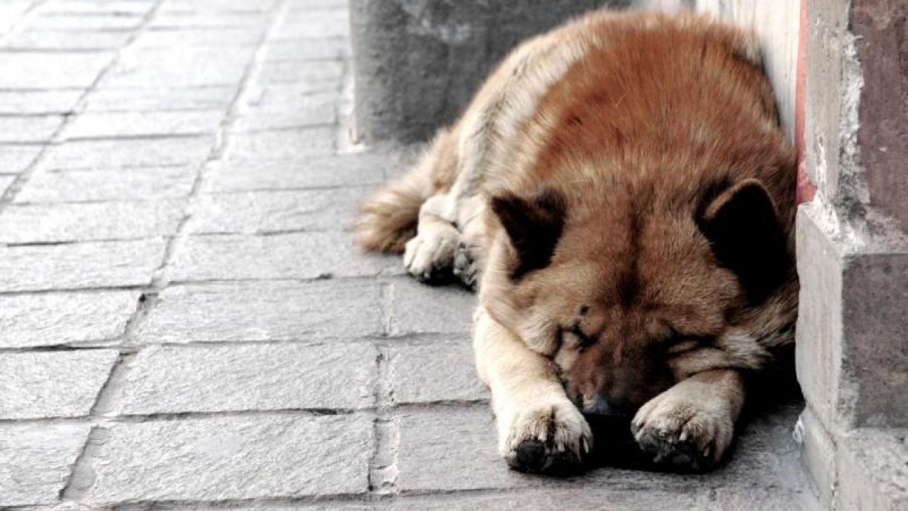 8ab4f7cf4713 Λάρισα  10 αδέσποτα ζώα νεκρά από δηλητηρίαση